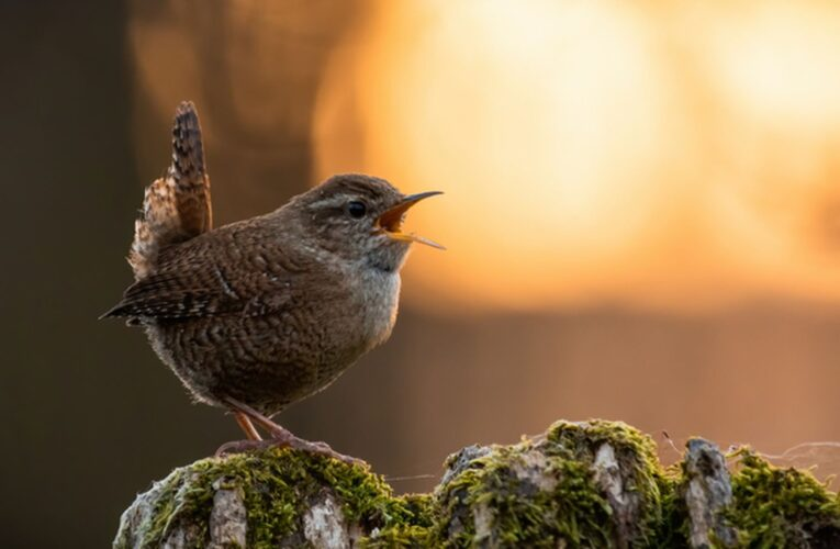 Why Do All The Birds Sing At Dusk?